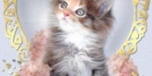 TV Troll: Fluffy Kittens Make The World Go Round