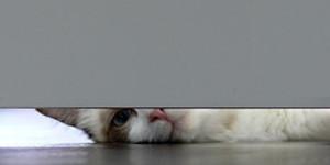 Peeping Dave