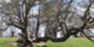 Arbor Ardour