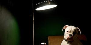 Bully for Bionic Bulldog