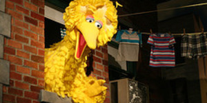 Are We All Related to Big Bird?