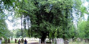 Nature-ist: Brockley Cemetery
