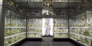 Museum Of The Month: The Hunterian Museum