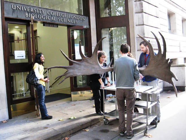 Elkie arrives back at the Grant Museum after a period of conservation. (C) UCL, Grant Museum of Zoology.