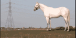 Plans For Giant Horse Submitted To Council