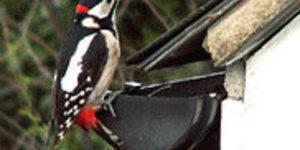 Get Twitching With The Big Garden Birdwatch