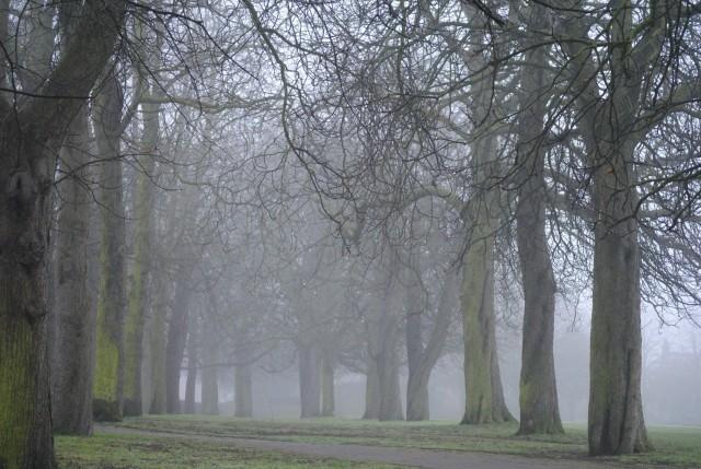 Misty horse chestnut trees