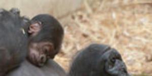 London Zoo's Latest Arrival