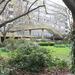 The Heygate Estate, a modern Secret Garden?