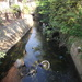 The Hogsmill River in Kingston...looks much cleaner elsewhere.