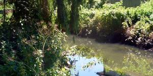 Nature-ist: The Pymmes Brook Trail