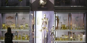 Should The Hunterian Museum's Giant Skeleton Be Buried At Sea?
