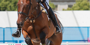 Olympic Sport Lowdown: Equestrian Events