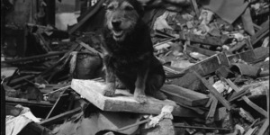 The Medal-Winning Dogs Of The London Blitz