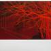Andrew Mackenzie, Crimson Reservoir, 2012. Courtesy Sarah Myerscough.