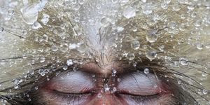 Review: Wildlife Photographer Of The Year @ Natural History Museum