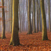 Beech Trees, Surrey, England by Craig Denford (Runner-up, Classic view). Image courtesy of Take A View