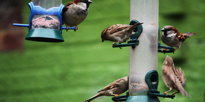 Feed The Birds Ready For Big Garden Birdwatch 2013