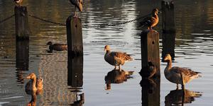 The Friday Photos: London Birdwatching