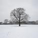 Singular tree by Marc Fairhurst