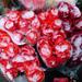 Flowers in Blackheath by viks2