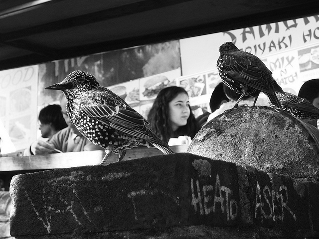 Feeding time in Camden market by Simon Crubellier