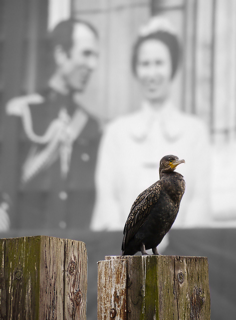 A regal old bird and some wild fowl by Groover