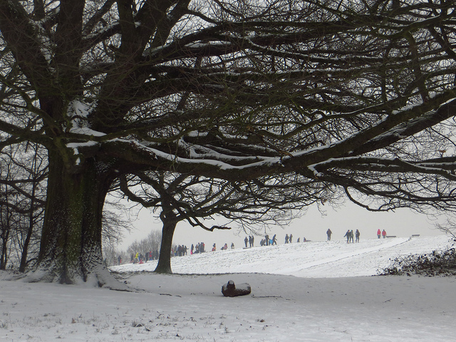 Sledging on the Heath by Laura Nolte