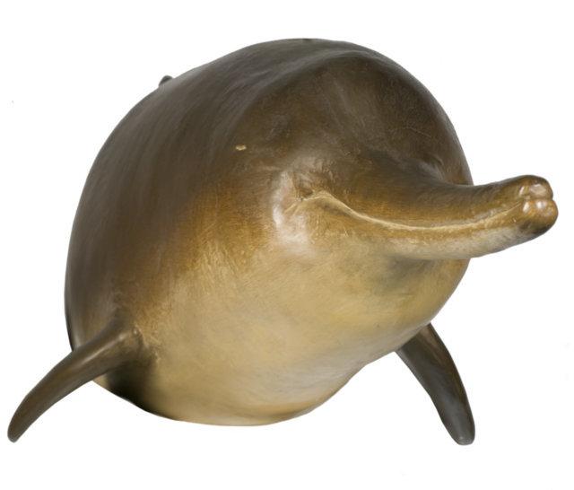 Baiji Dolphin. ® The Natural History Museum, London