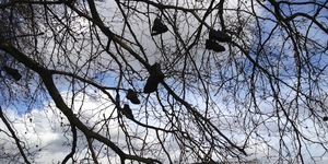 Shoes In A Tree Opposite MI6. Why?