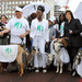 Cherie Blair, Nancy Dell'Olio and friends prepare to lead a troupe of goats across London Bridge, 2012