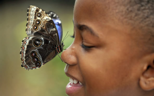 Sensational Butterflies opens next week at the Natural History Museum. Photo © Natural History Museum