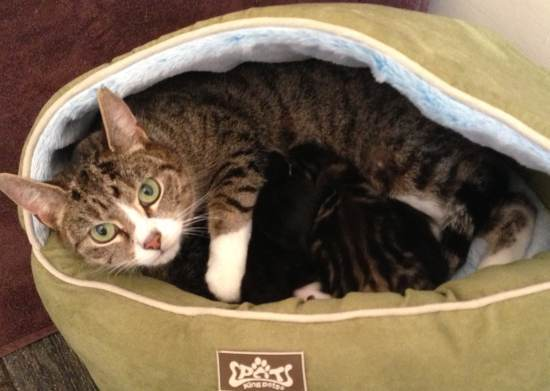 Catford Cat Bin Drama Hits Mumsnet