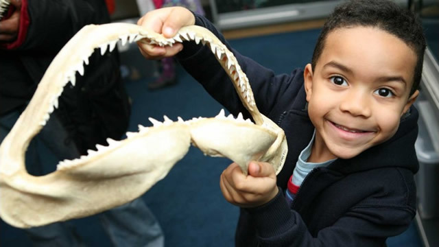 A boy holds a shark's jaw at the Horniman Museum's Hands on Base. Photo by Laura Mtungwazi