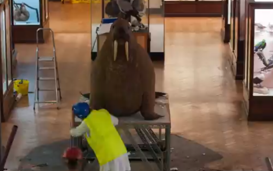 Video: Horniman Walrus Goes On A Summer Holiday