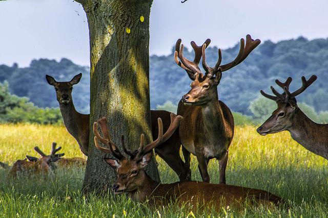 deer_050713