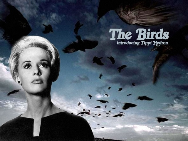 See Hitchcock's The Birds On Outdoor Screen