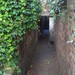 Mysterious ivy-hung enterance to Shepherdess Walk Park