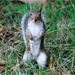 Squirrel, Hyde Park