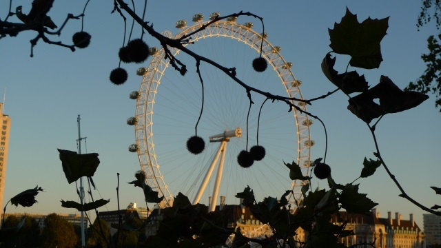Climbing The Trees Of London