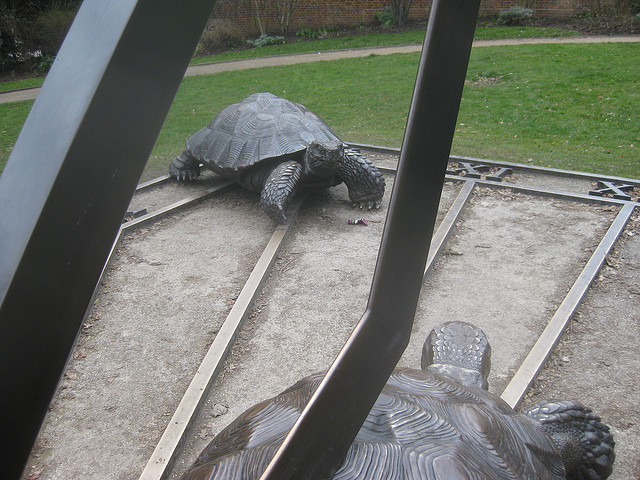 hollandtortoise