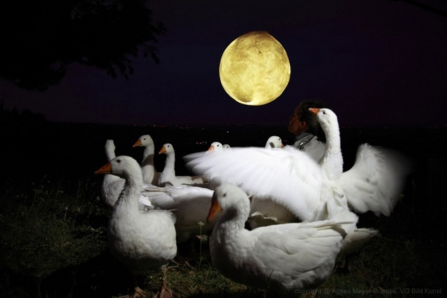 Agnes Meyer-Brandis. Moon Goose Analogue: Lunar Migration Bird Facility. Image courtesy of the artist