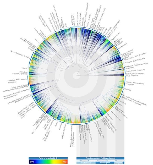 Avian Tree of Life (c) Gavin Thomas, Walter Jetz, Jeff Joy, Arne Mooers, Klass Hartmann, 2012. First published in Nature.