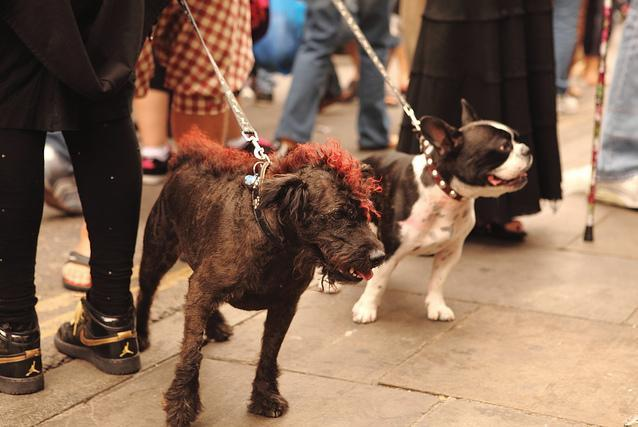Plans For East London Dog Cafe