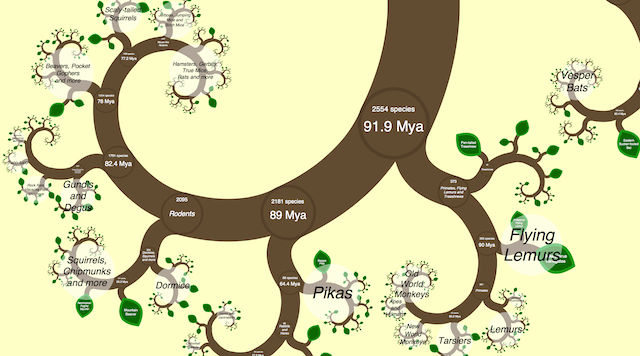 A modern visualisation of how species are interrelated. One Zoom Tree, copyright James Rosindell