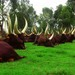 Royal Cows, Yves Manzi