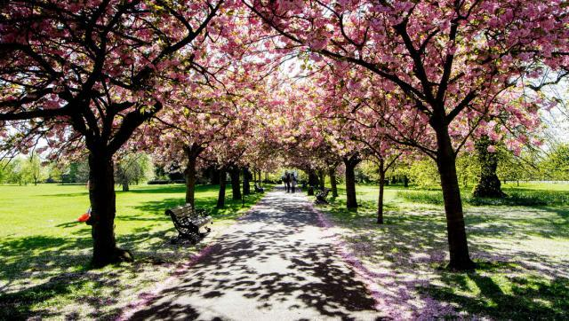 blossom_170414