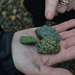 Green stones from the foreshore. The archaeologists are not entirely sure what these are -- especially the bright green stone on the left. These have been found in some numbers at Rotherhithe. Anyone got a suggestion?