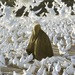 Steve McCurry, Pigeon feeding near blue mosque. Image courtesy the artist and Beetles + Huxley