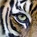 Spotlight on Sumatra. Image: Paul Hilton / Greenpeace